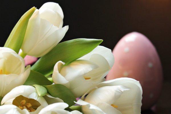 Życzenia z okazji Światowego Dnia Zdrowia oraz Świąt Wielkanocnych